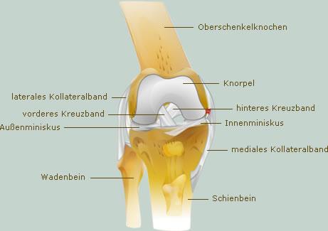 Innenbandverletzungen - Sportverletzungen - sportschau.de